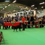 Dogshow_Nijmegen_20131221-3916