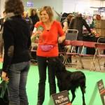 Dogshow_Nijmegen_20131221-3938
