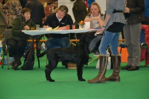 INt dogshow Eindhoven 2016 030